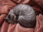 猫をかぶって眠っている。